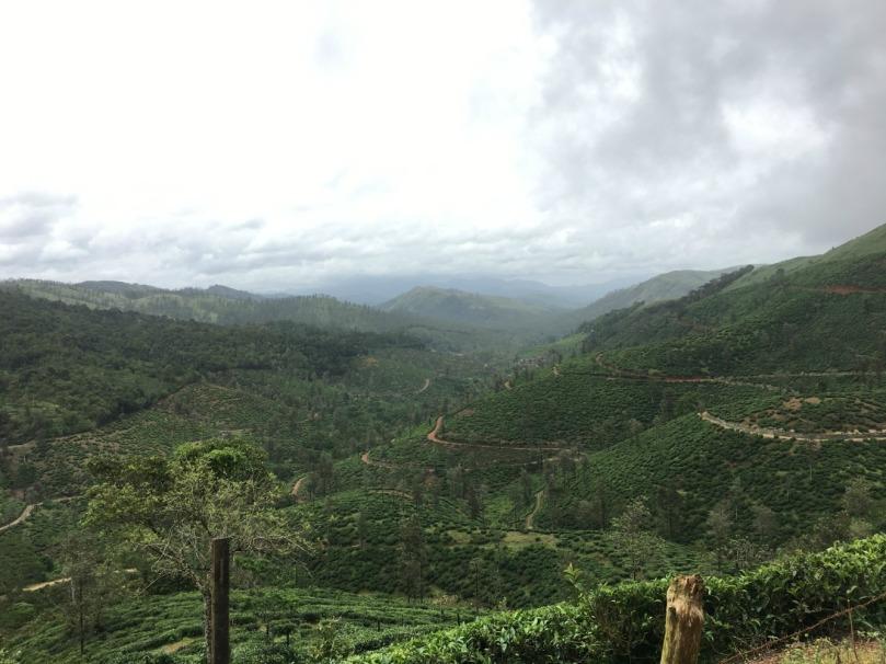 through tea estates 2
