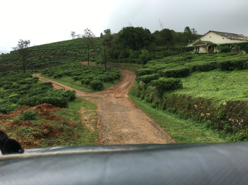 through tea estates