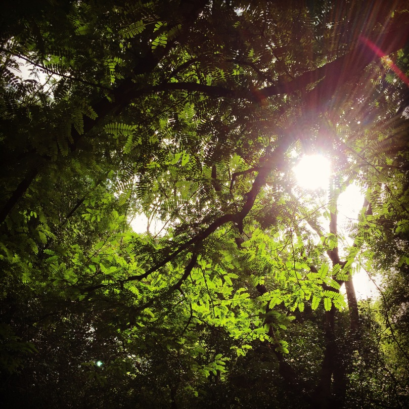 sun-shining-through-the-trees