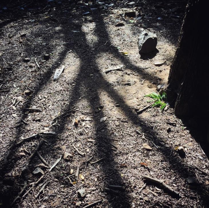 bird-feet-shadow