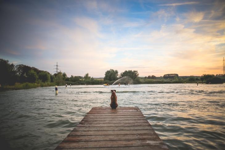 dog sitting on a pier