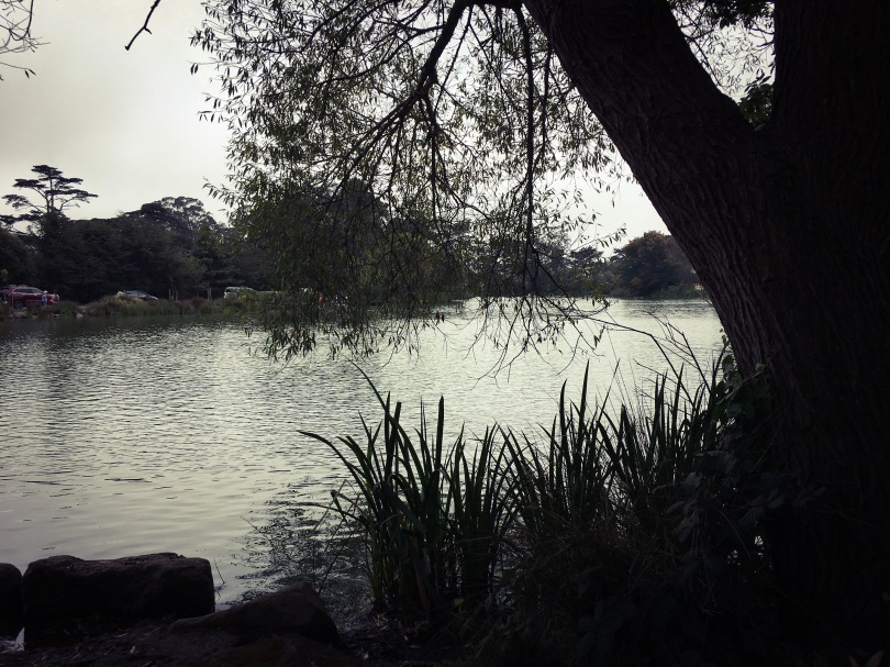 The Stow Lake in the Golden Gate Park