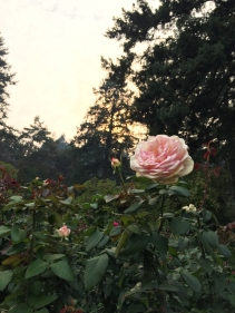 International Rose Test Garden 1