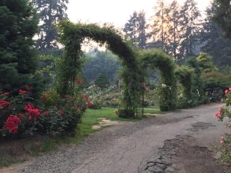 International Rose Test Garden 2