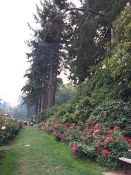 International Rose Test Garden 3