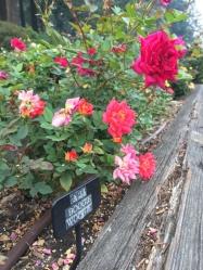 International Rose Test Garden 4