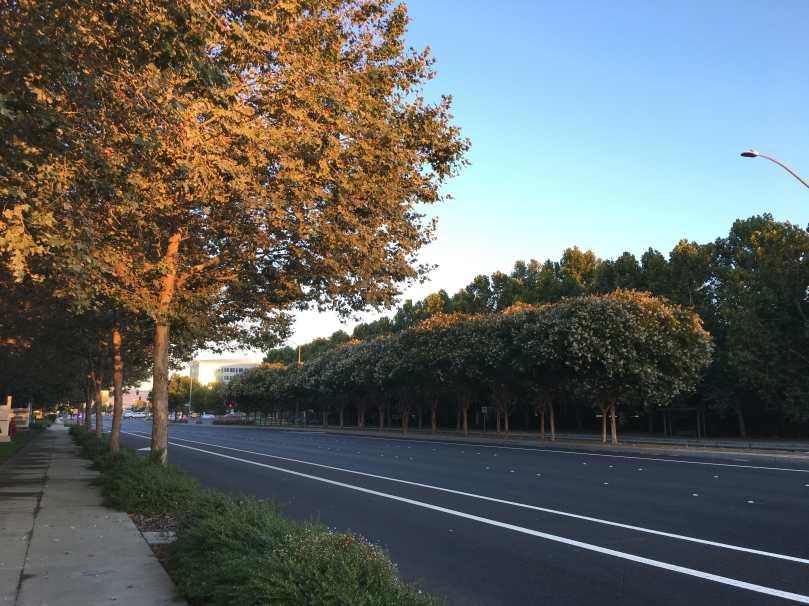 Dublin trees
