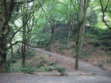 Hoyt Arboretum, Portland