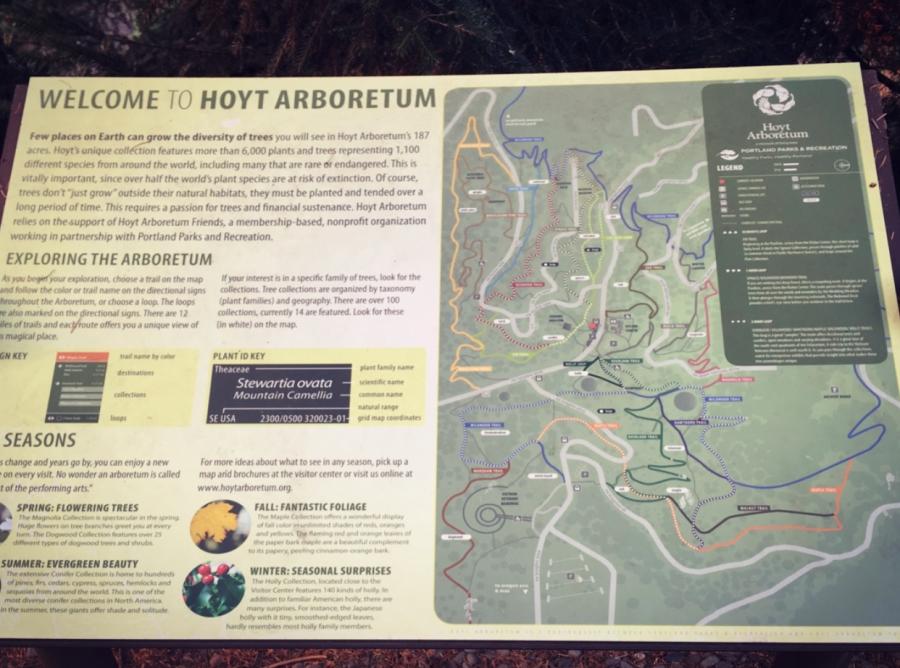 Hoyt Arboretum, Portland.jpg