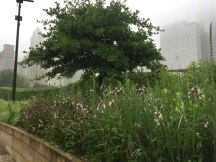 Lurie-Garden-3