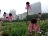 Lurie-Garden-4