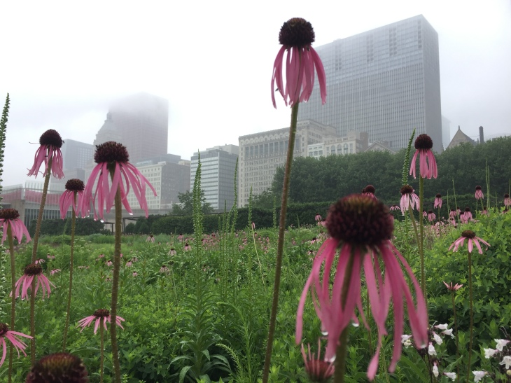 The Lurie Garden, Millenium Park, Chicago