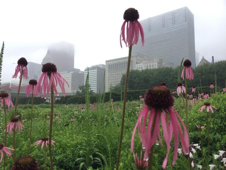 The Lurie Garden, Millenium Park, Chicago