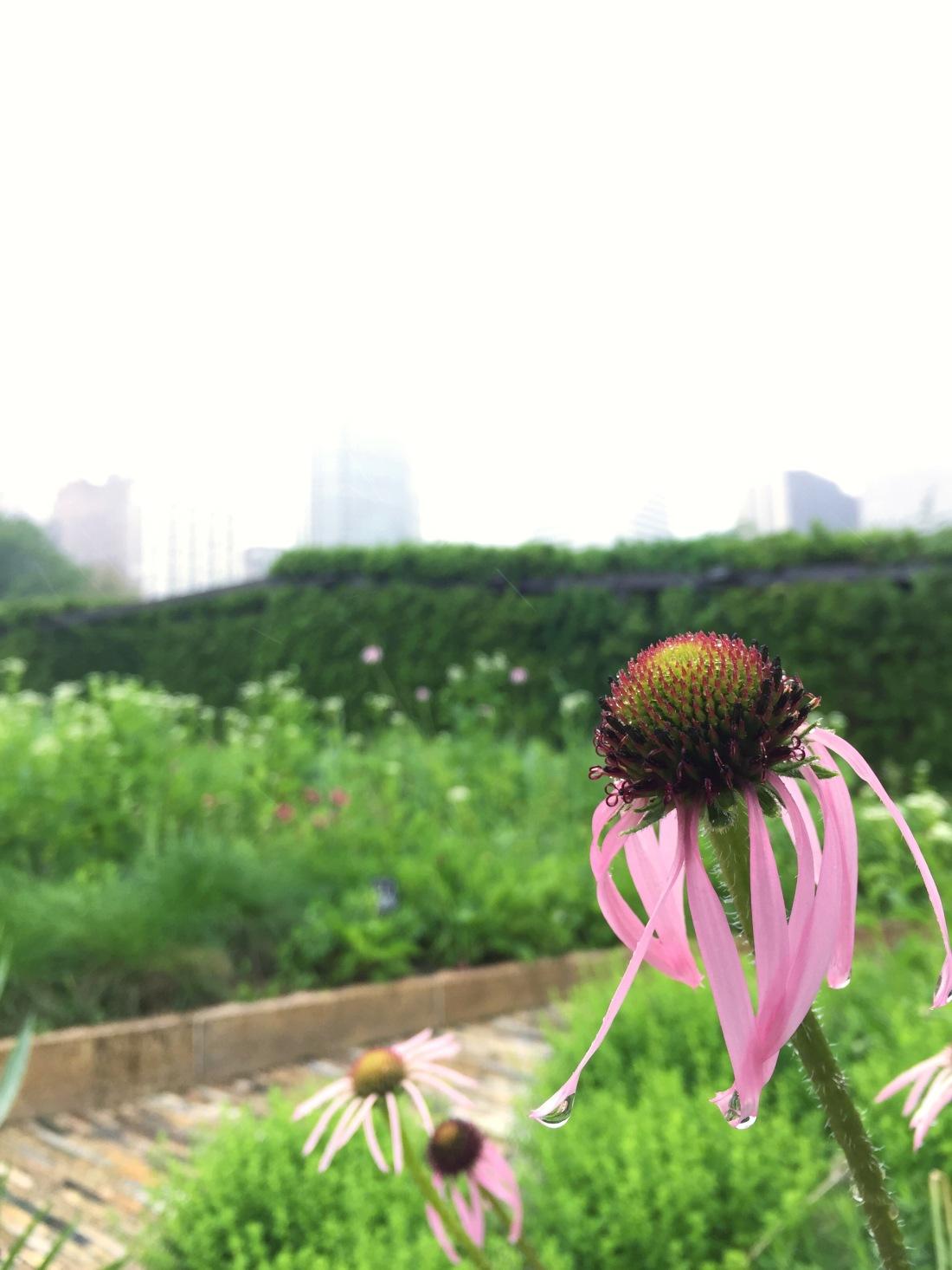 Laurie Garden, Millennium Park, Chicago