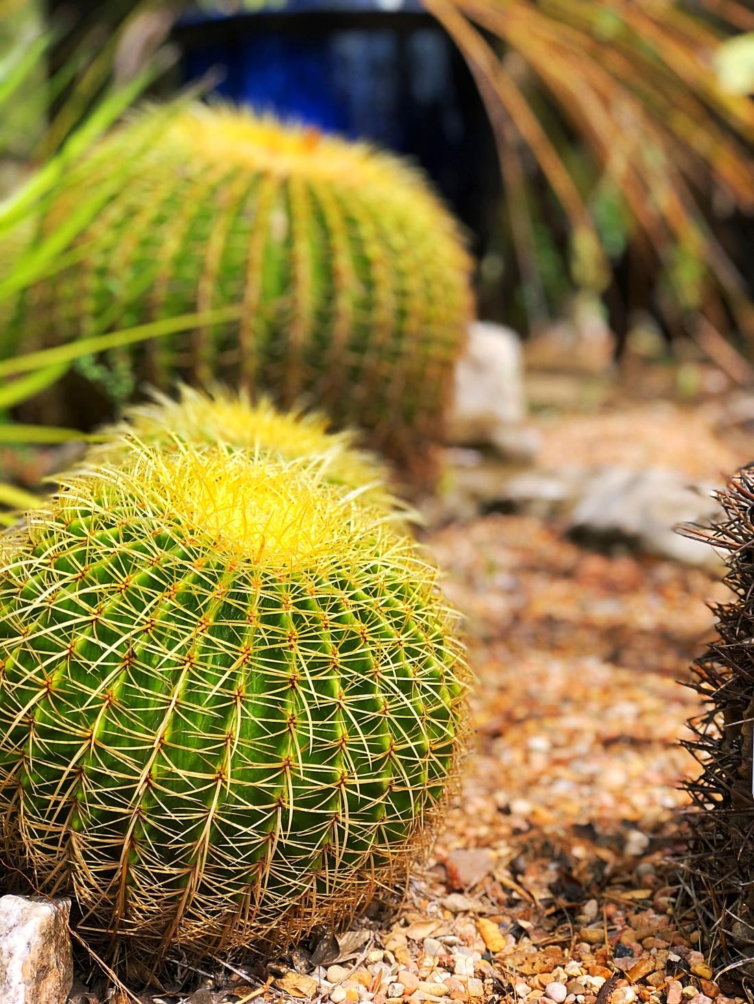 Cactus - Zilker Botanical Garden in Austin, Texas