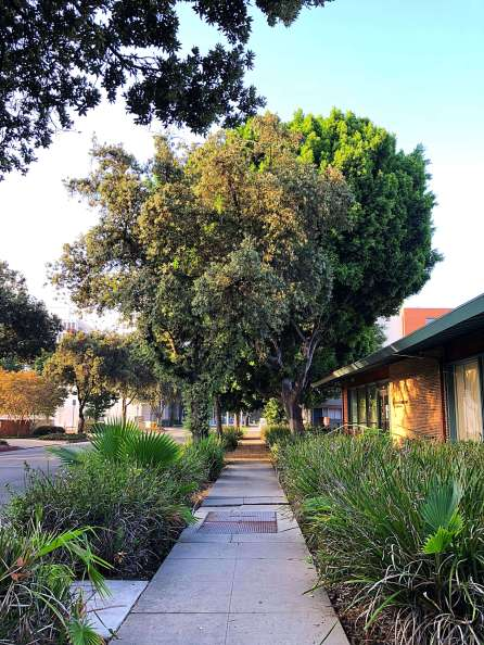 Sidewalks in Pasadena
