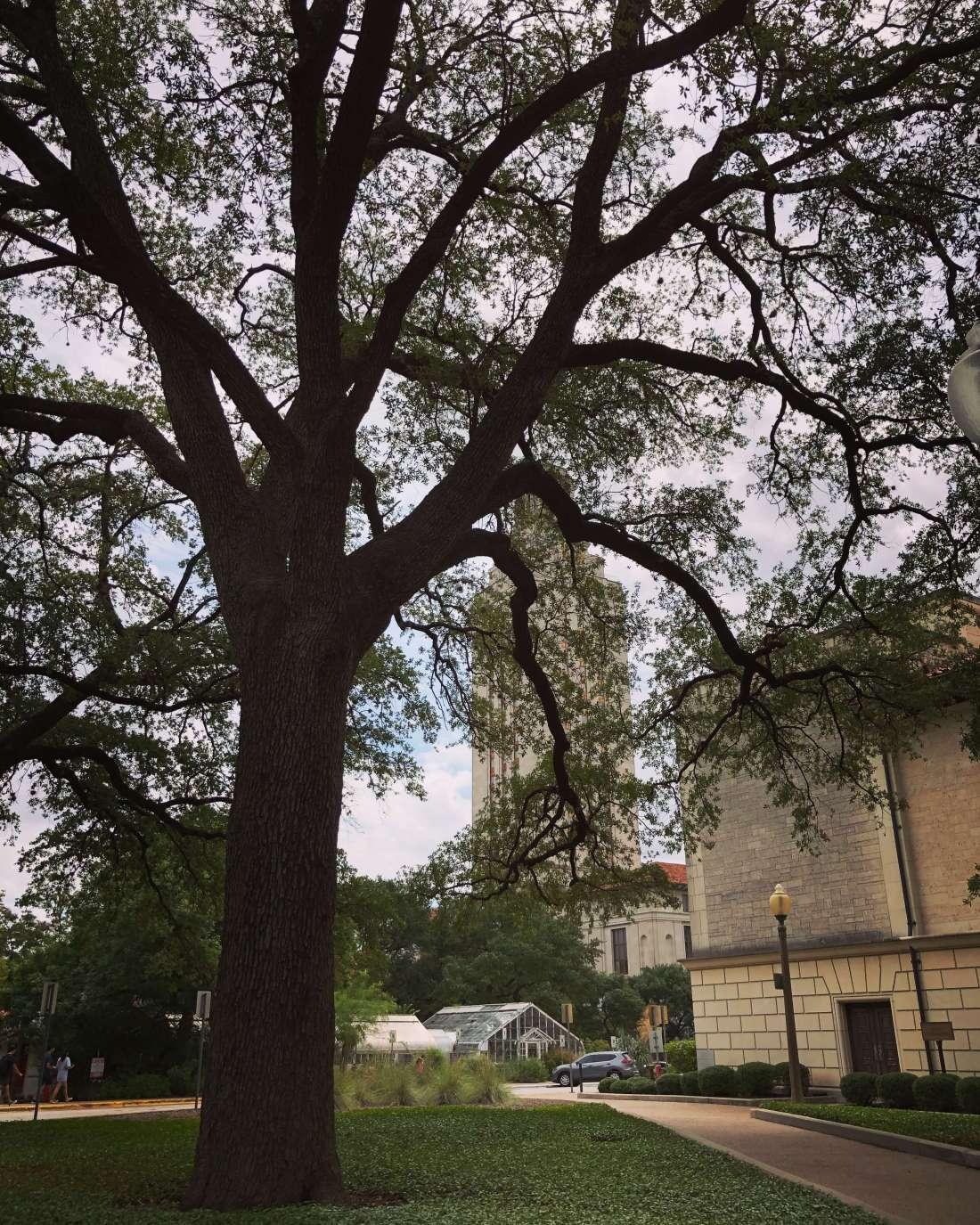 University of Texas in Austin