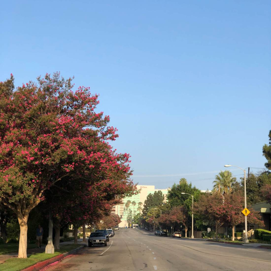 Morning walk in Pasadena, California