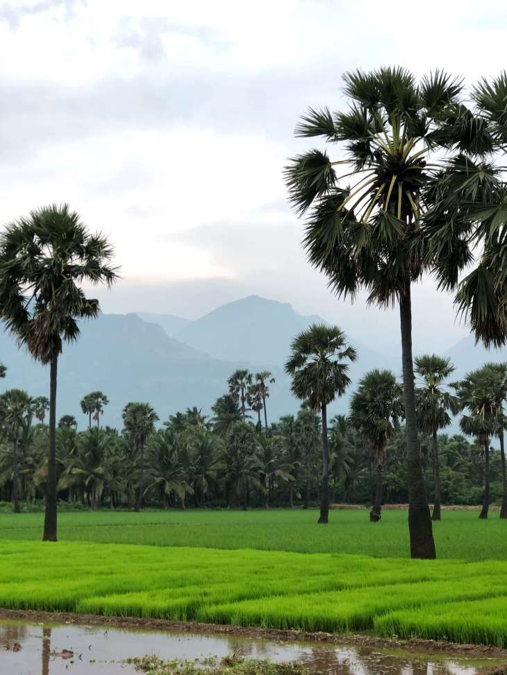Tenkasi views, Tamilnadu