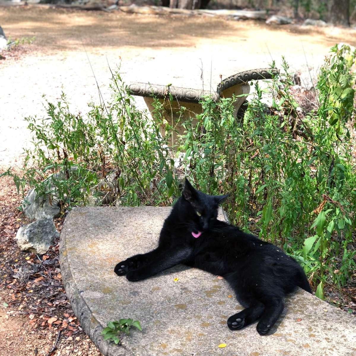 Black cat - Zilker Botanical Garden in Austin, Texas