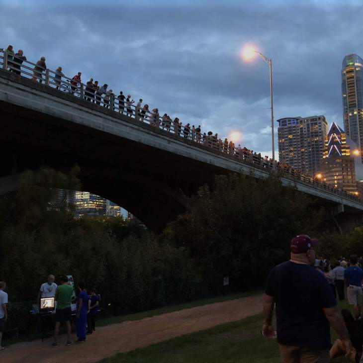 Congress Avenue Bridge Bats in Austin, Texas