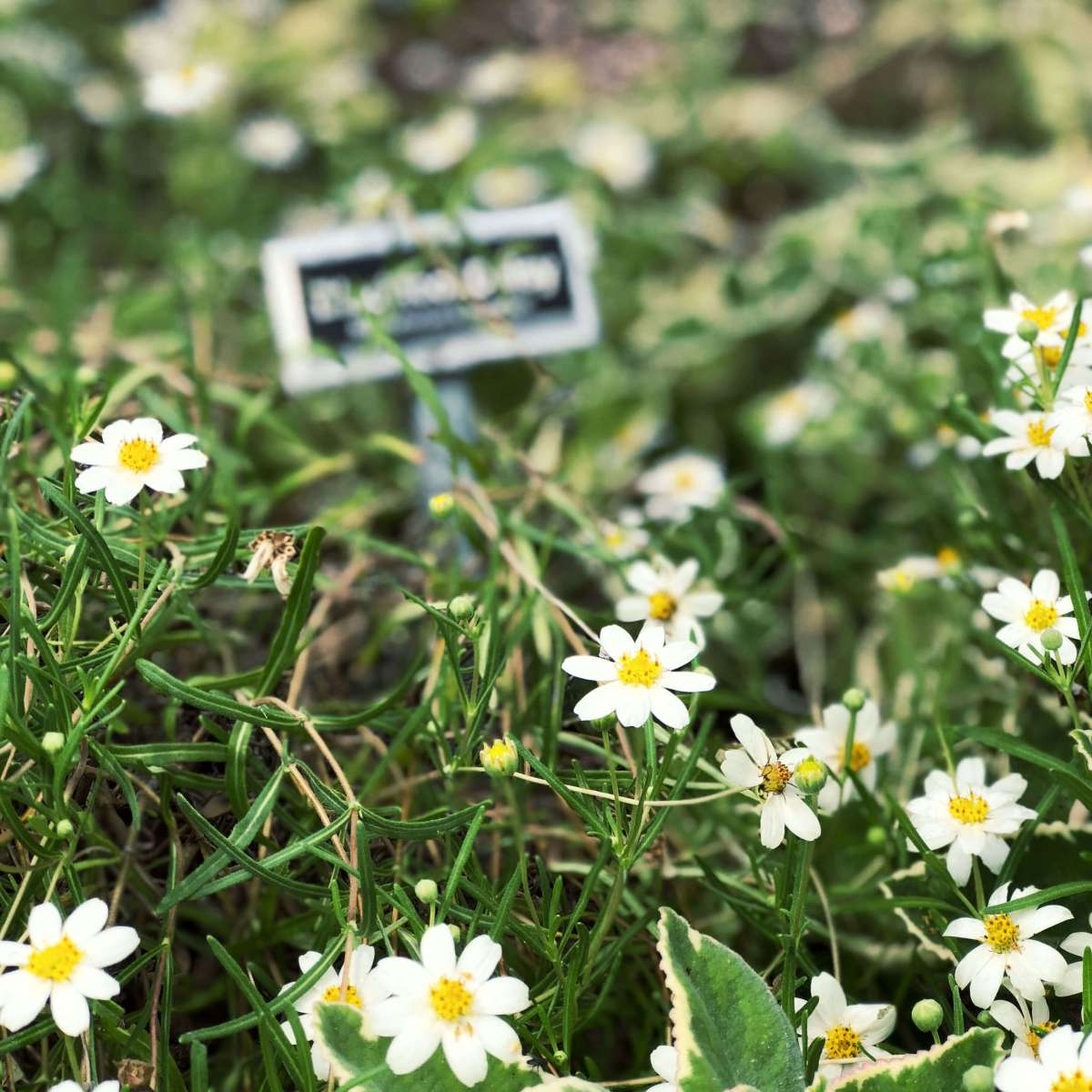 Flowers in the Zilker Botanical Garden in Austin, Texas