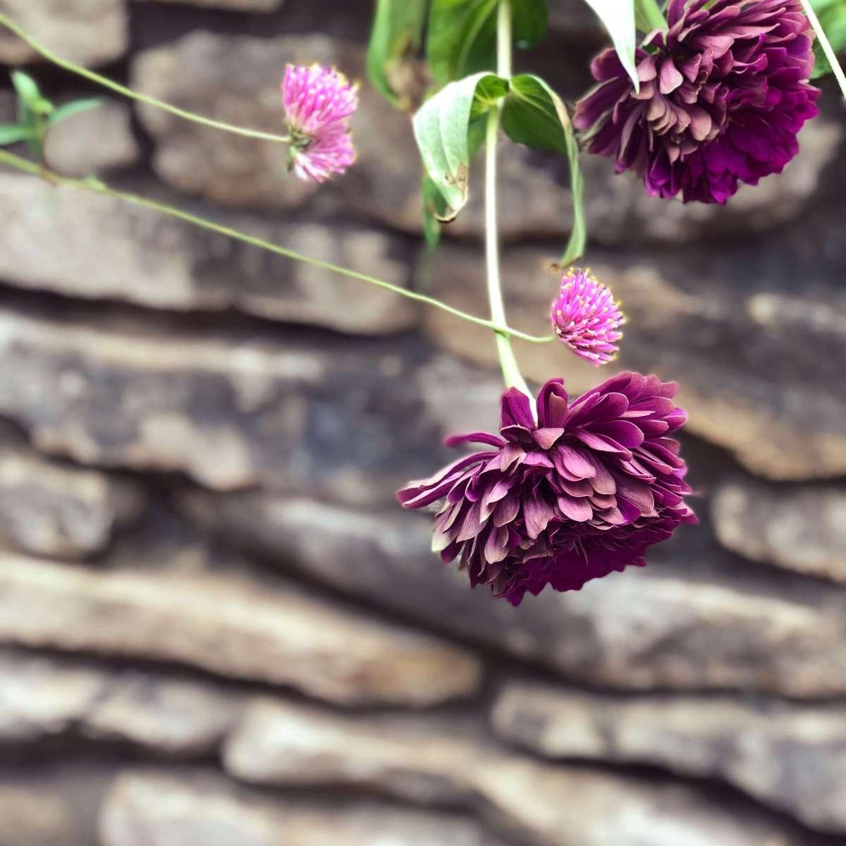Flowers at Zilker Botanical garden, Austin, Texas