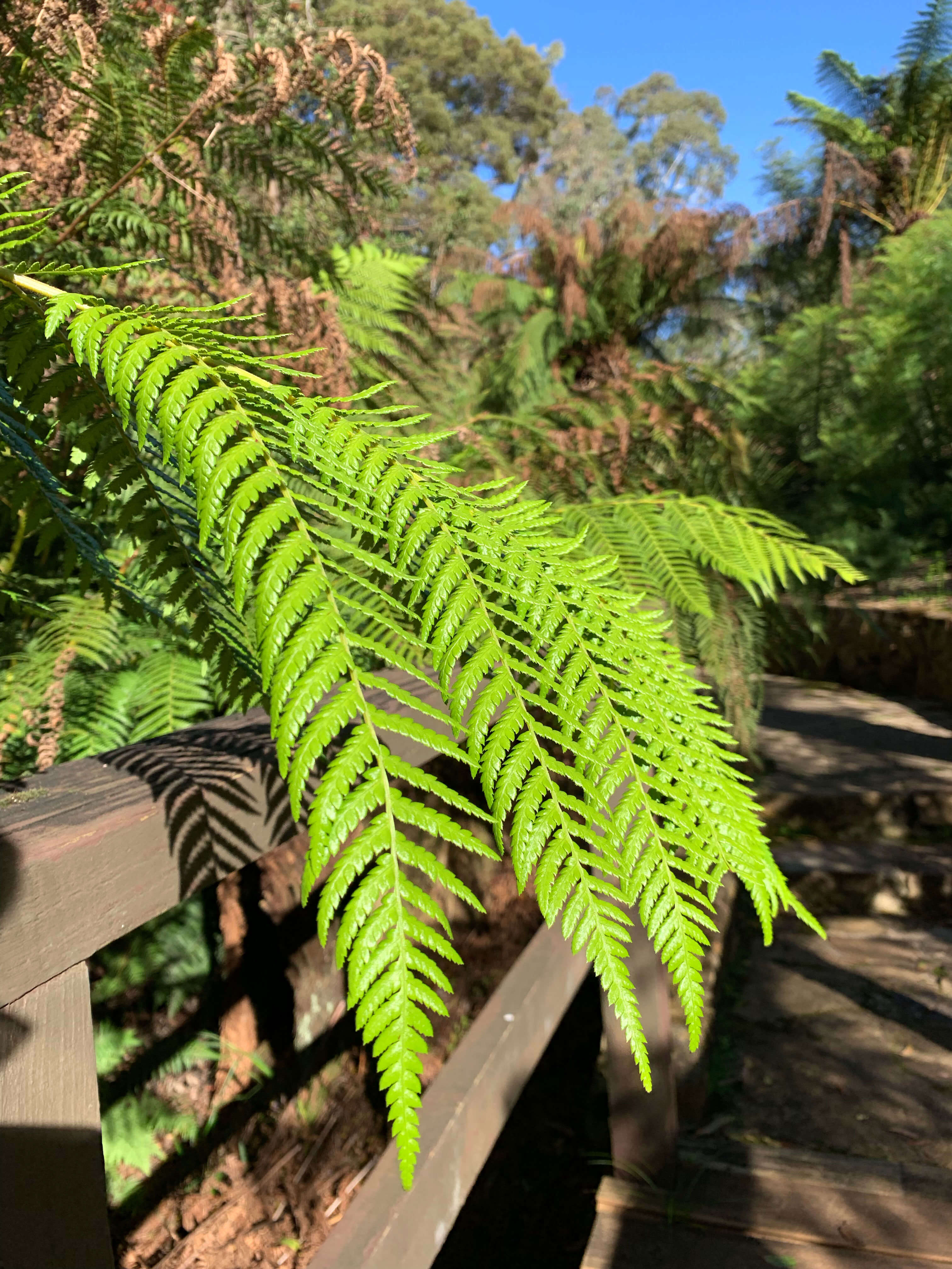 National Botanical Gardens - plant in the rainforest gully