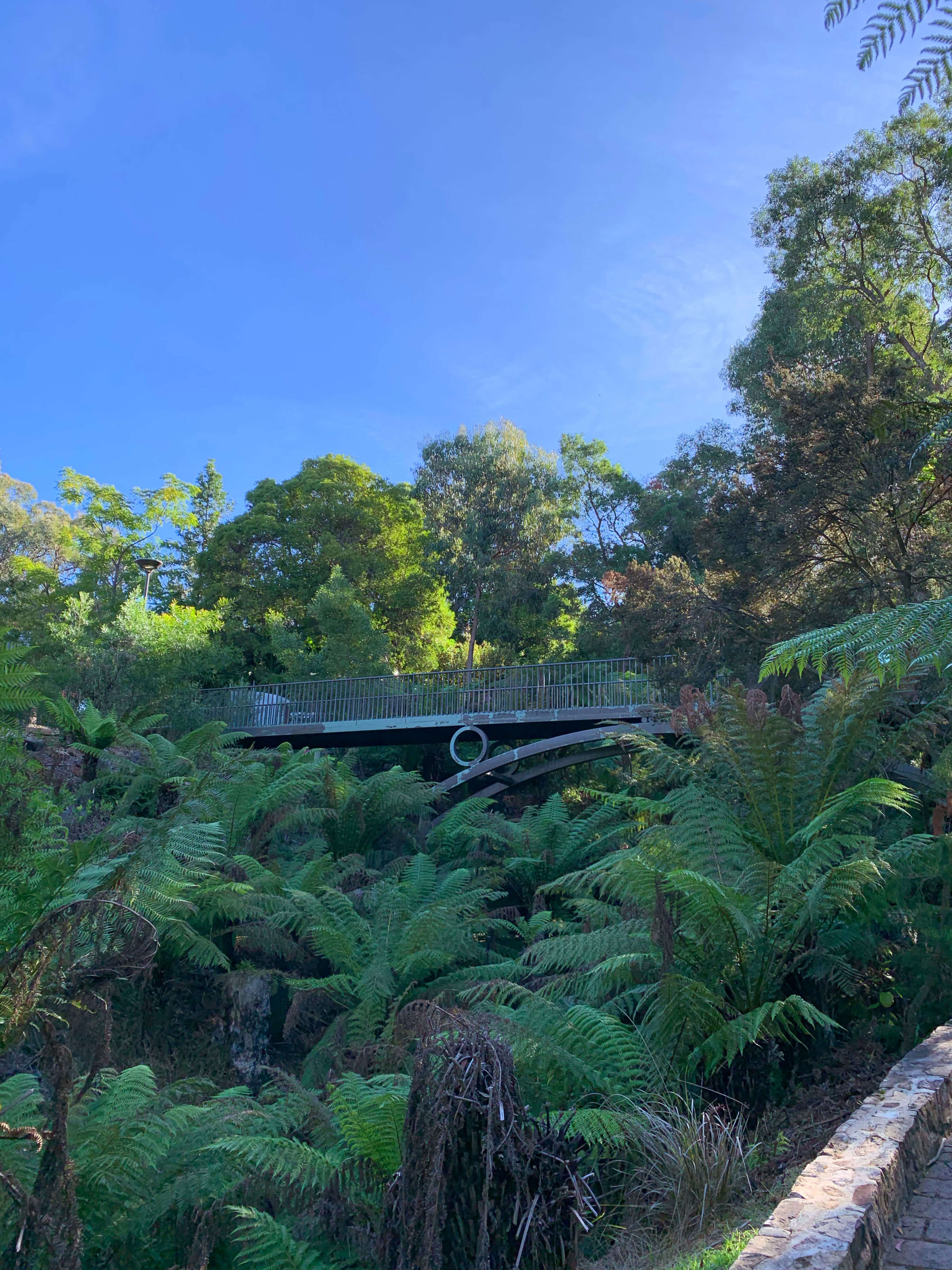 National Botanical Gardens - rainforest gully