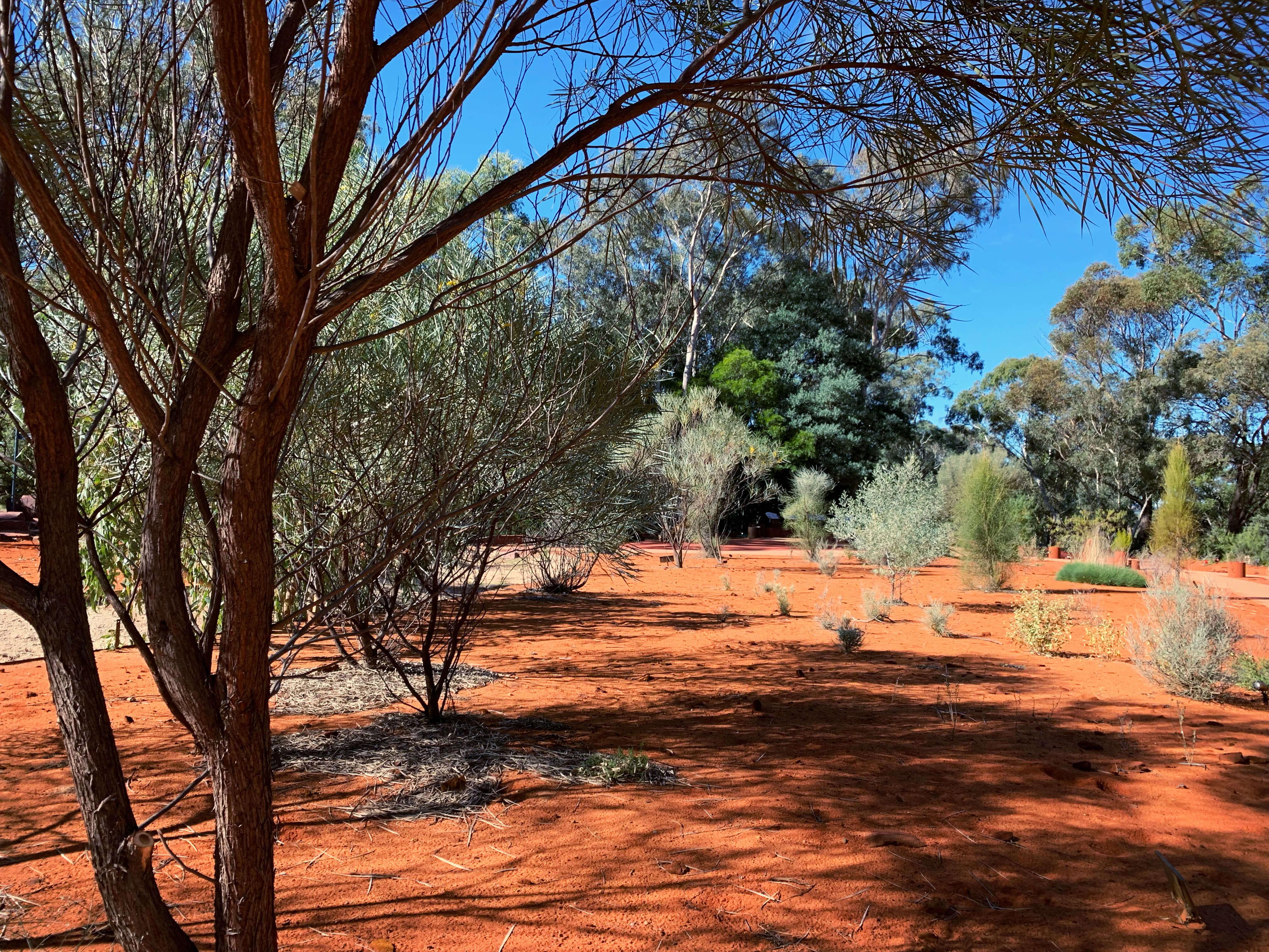 National Botanical Gardens - red centre garden landscape