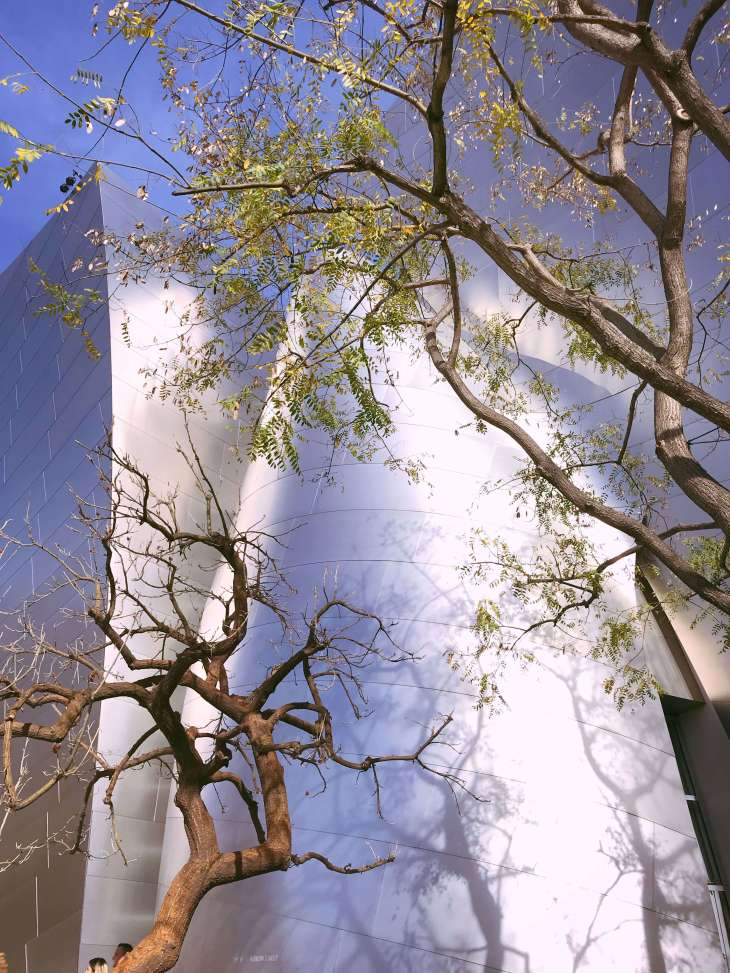 Trees at the Walt Disney Concert Hall in Los Angeles