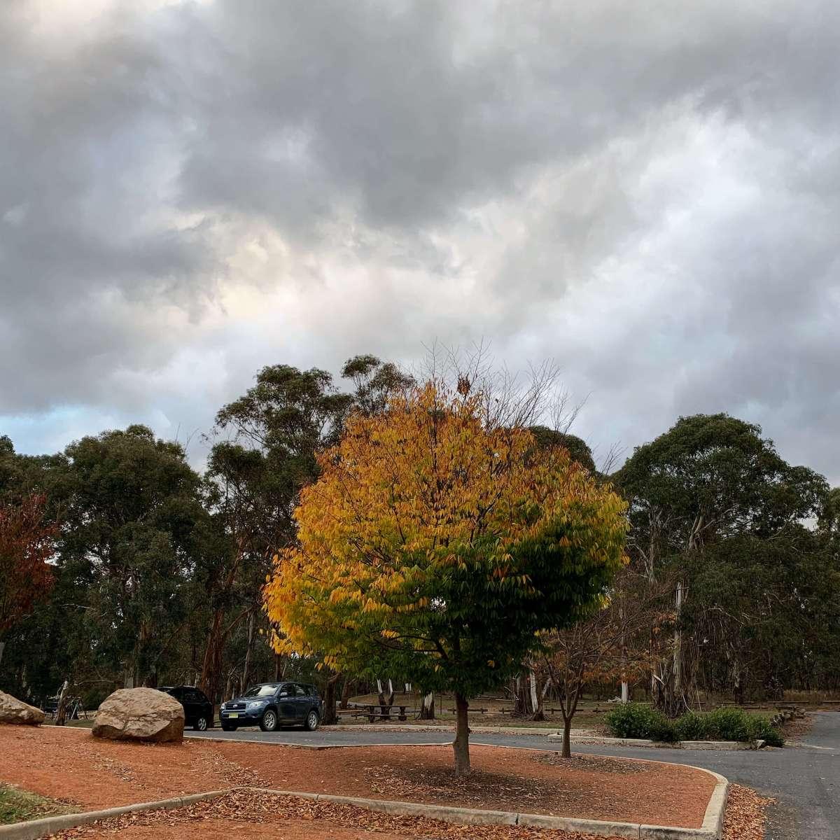 Autumn in Canberra, Australia