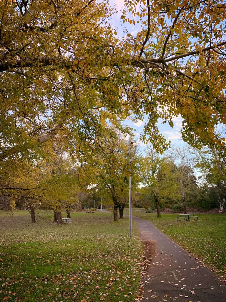 Walking down this aisle - by Lake Ginninderra in Canberra