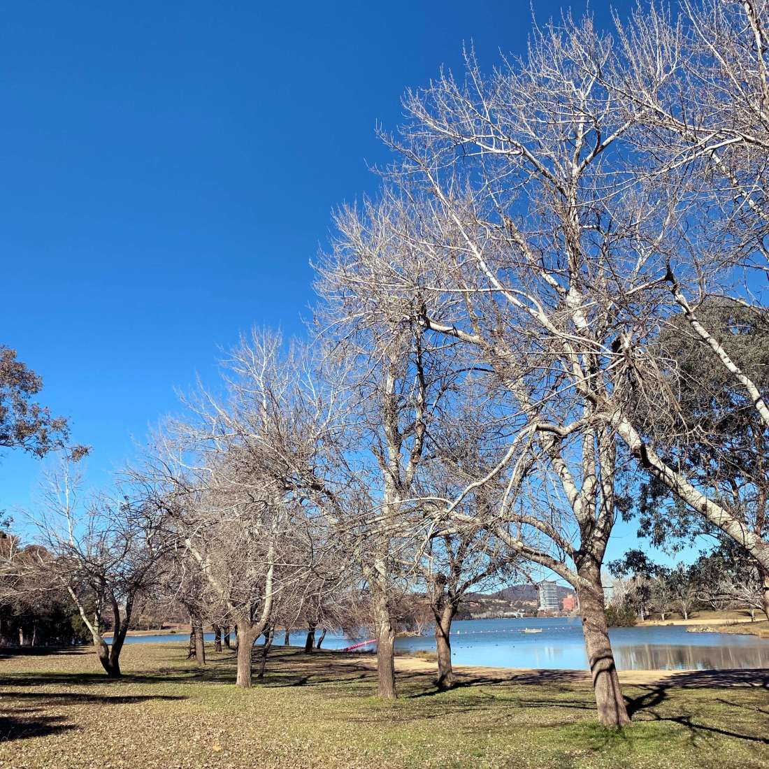 Winter trees by the Lake Ginninderra