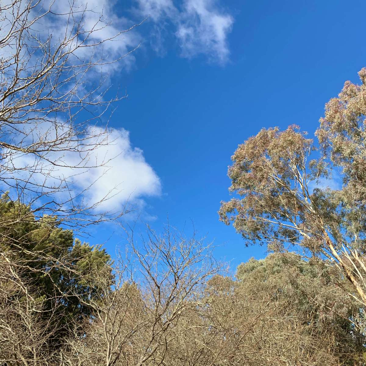 Blue skies - Canberra