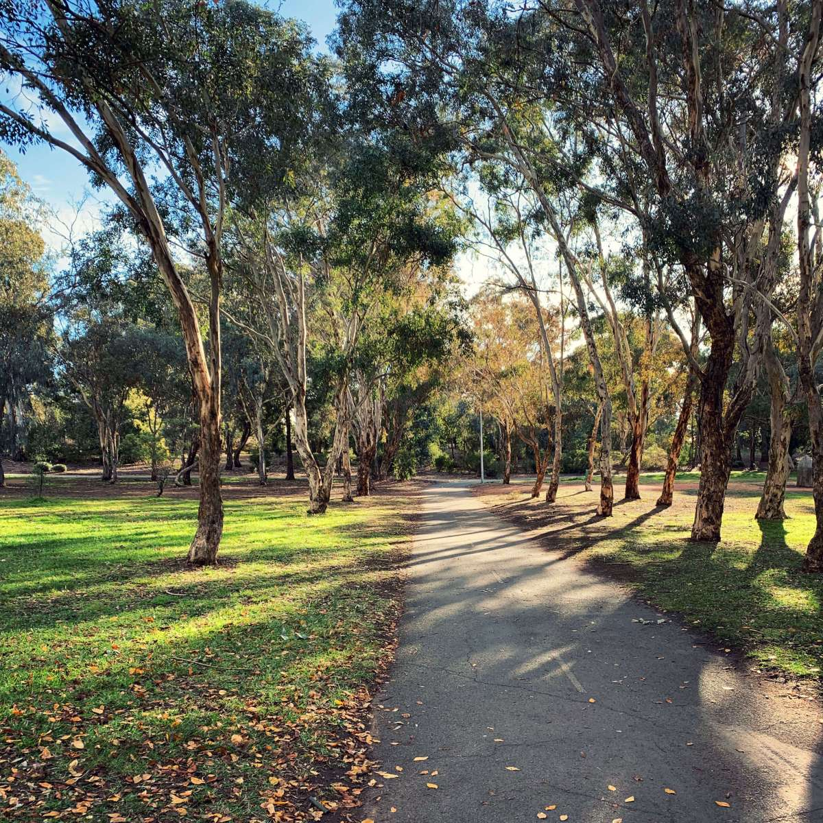 Shadow of trees by the Lake Ginninderra