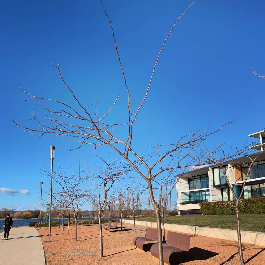 Trees at Trevillian Quay, Canberra