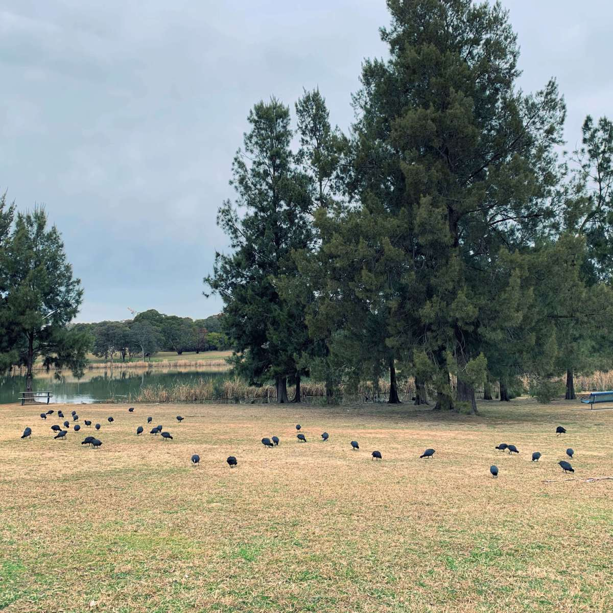 Western Foreshore Park, Lake Ginninderra, Canberra