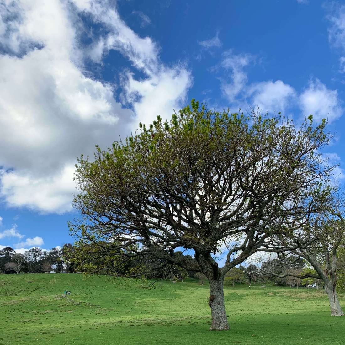 One Tree Hill, Auckland, New Zealand