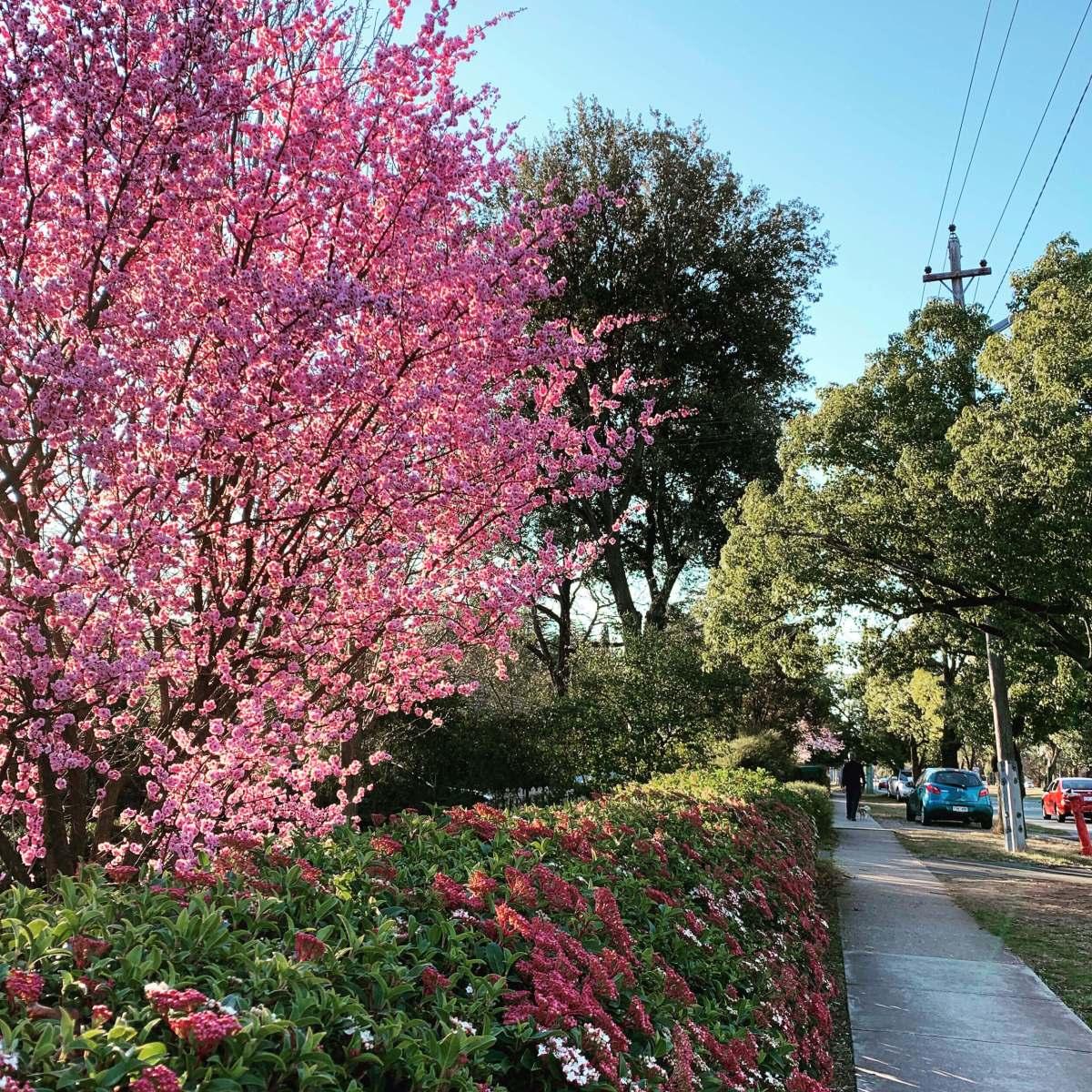 Springtime in Canberra