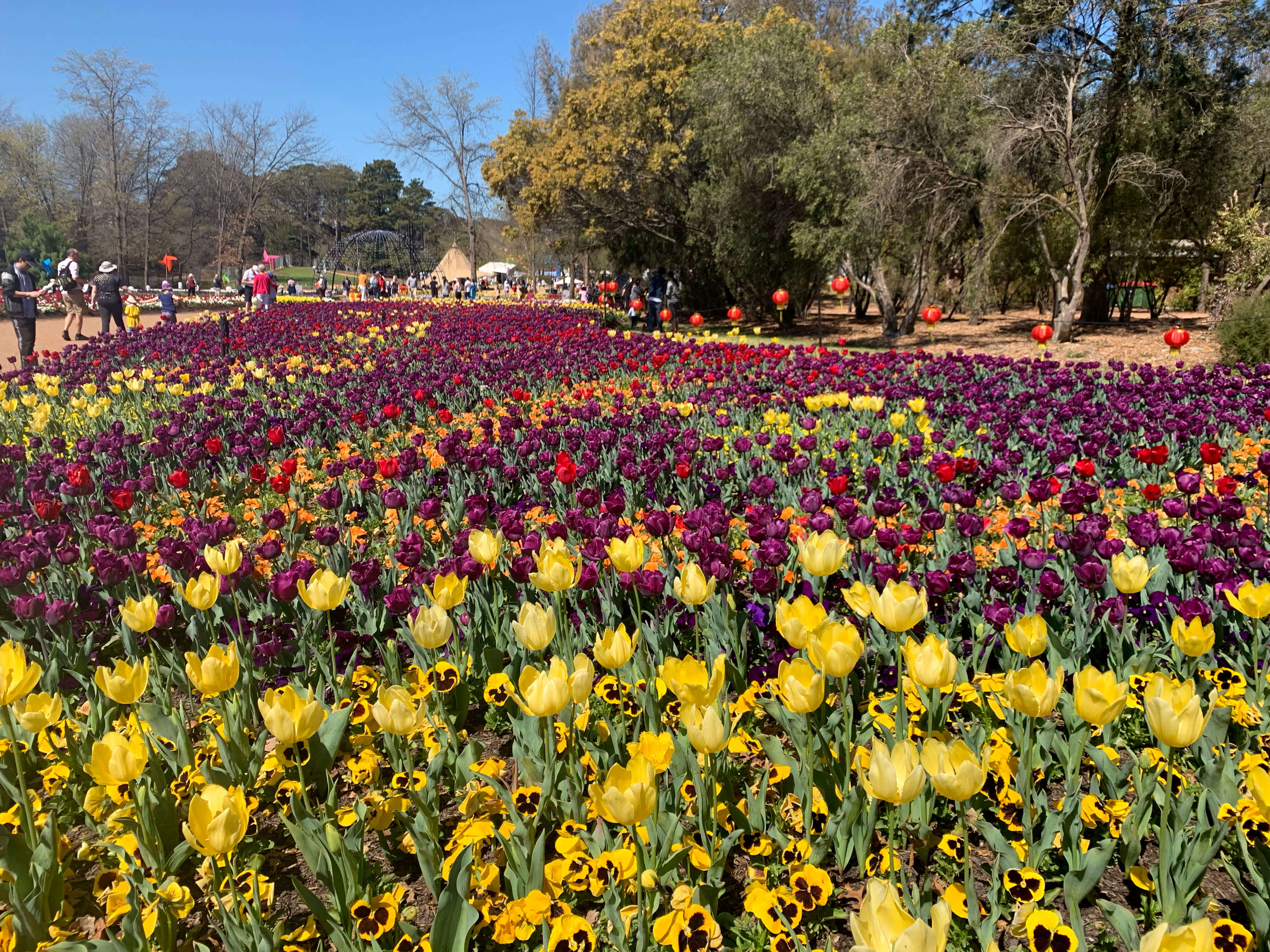Floriade 2019 in Canberra - 5