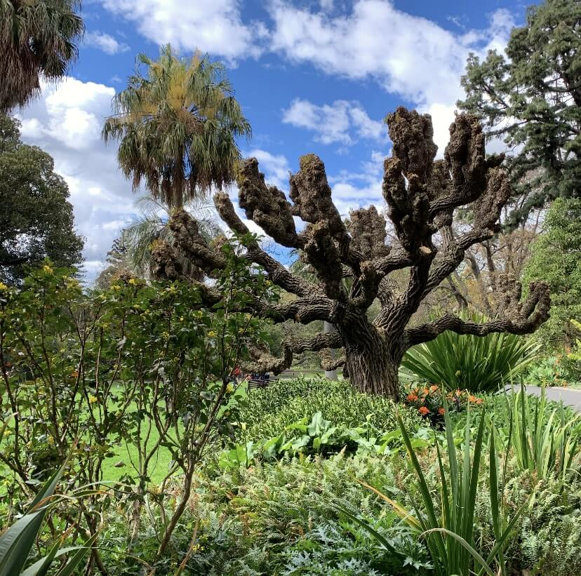 Royal Botanical Gardens, Melbourne, Victoria