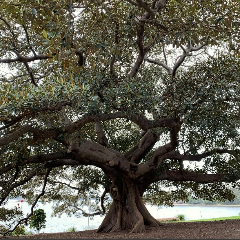 The Royal Botanical Gardens, Sydney