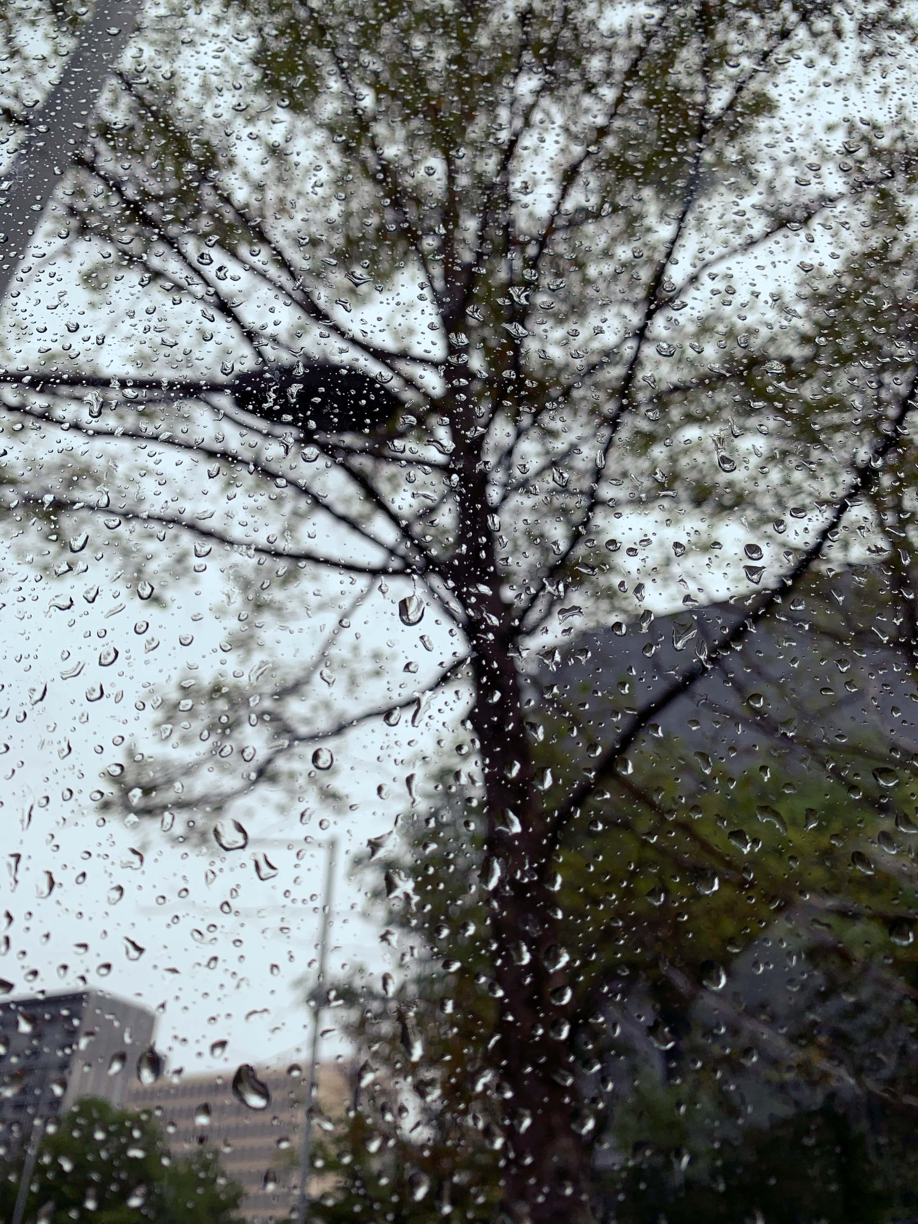 Summertime rains in Canberra
