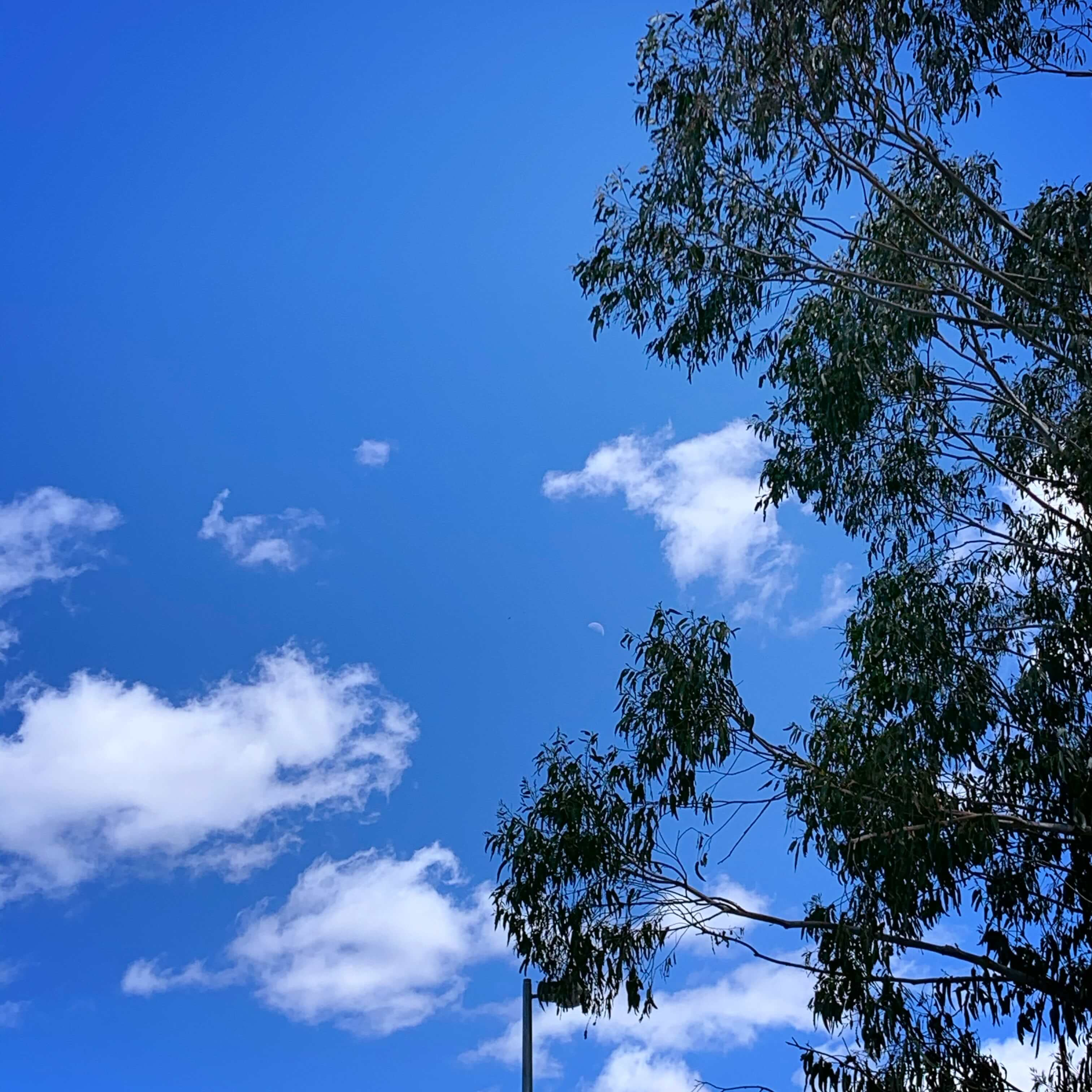 Autumn midday in Canberra