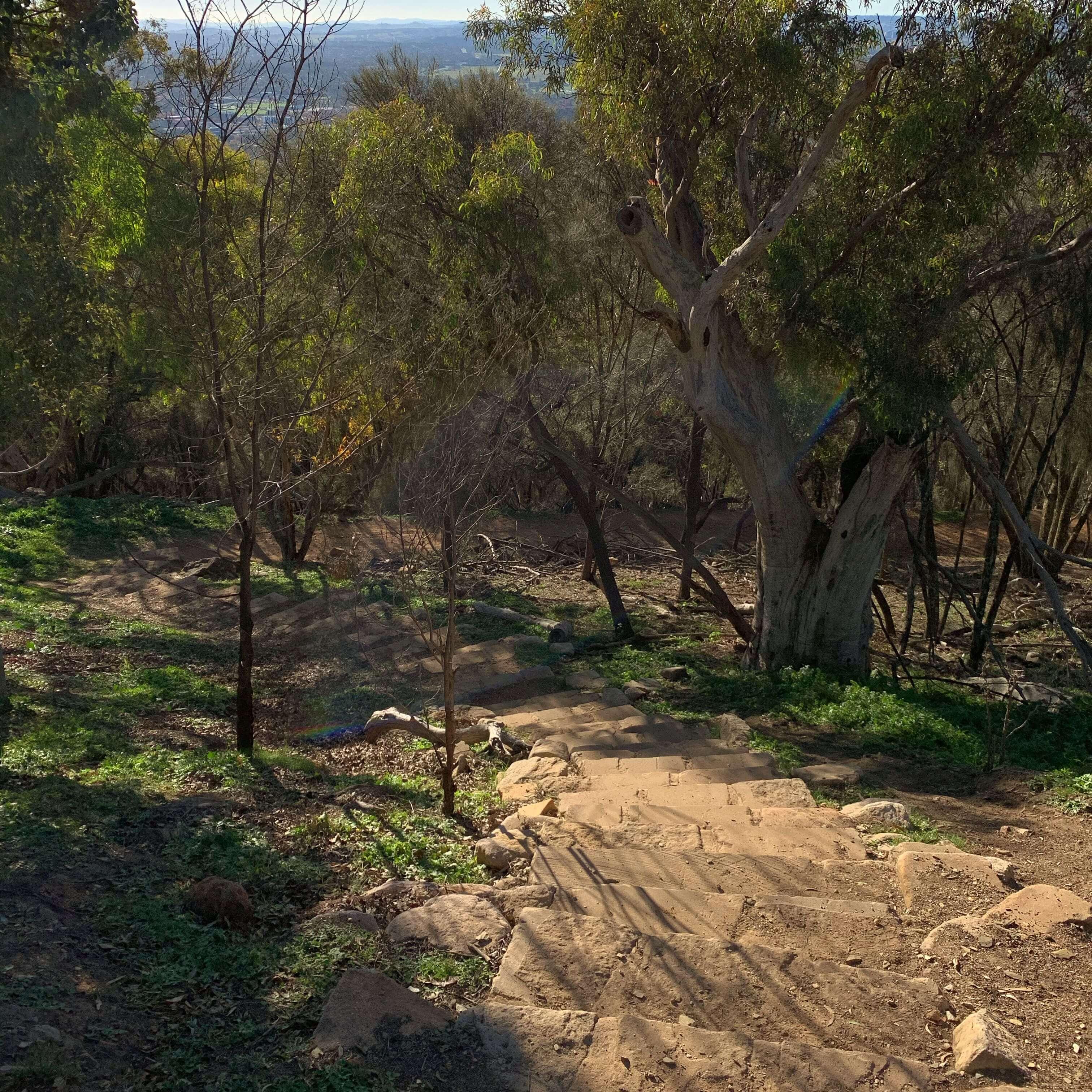 Climbing Mount Ainslie, Canberra
