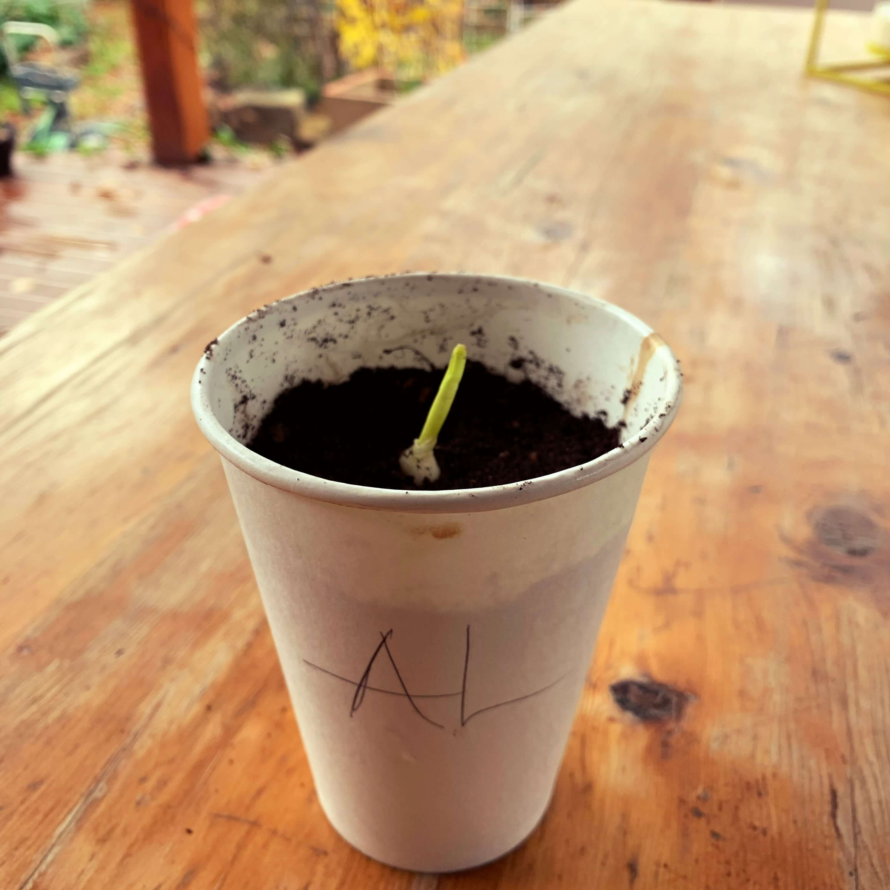 Reusing a takeaway coffee cup
