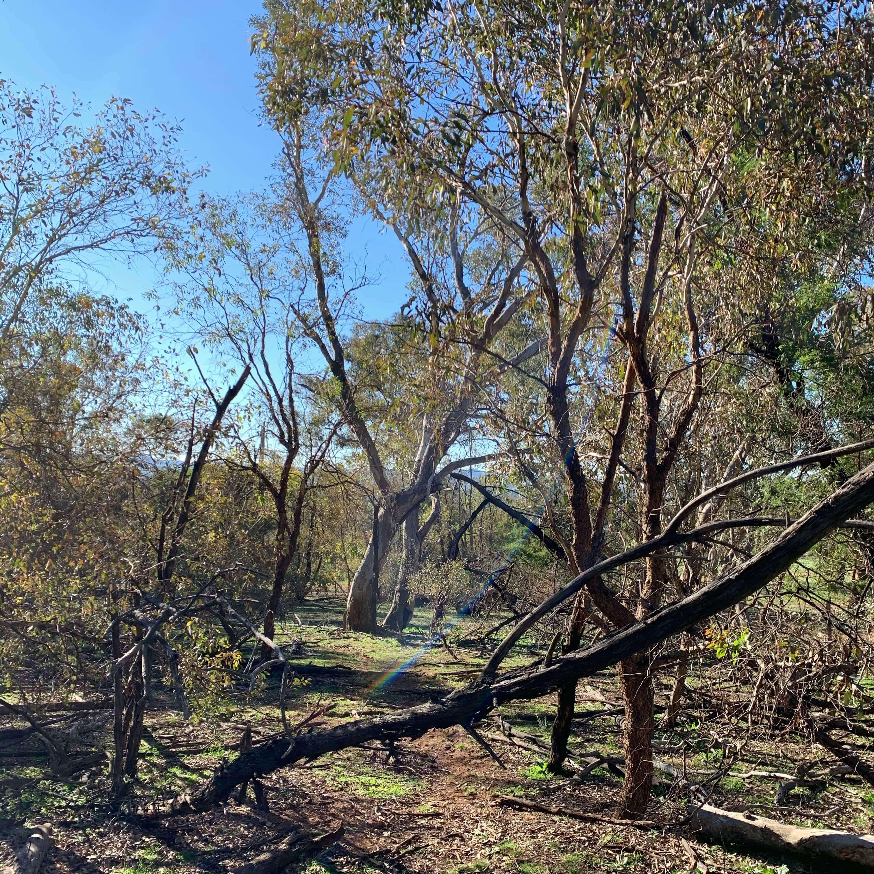 Bushwalking, Mt. Ainslie, Canberra