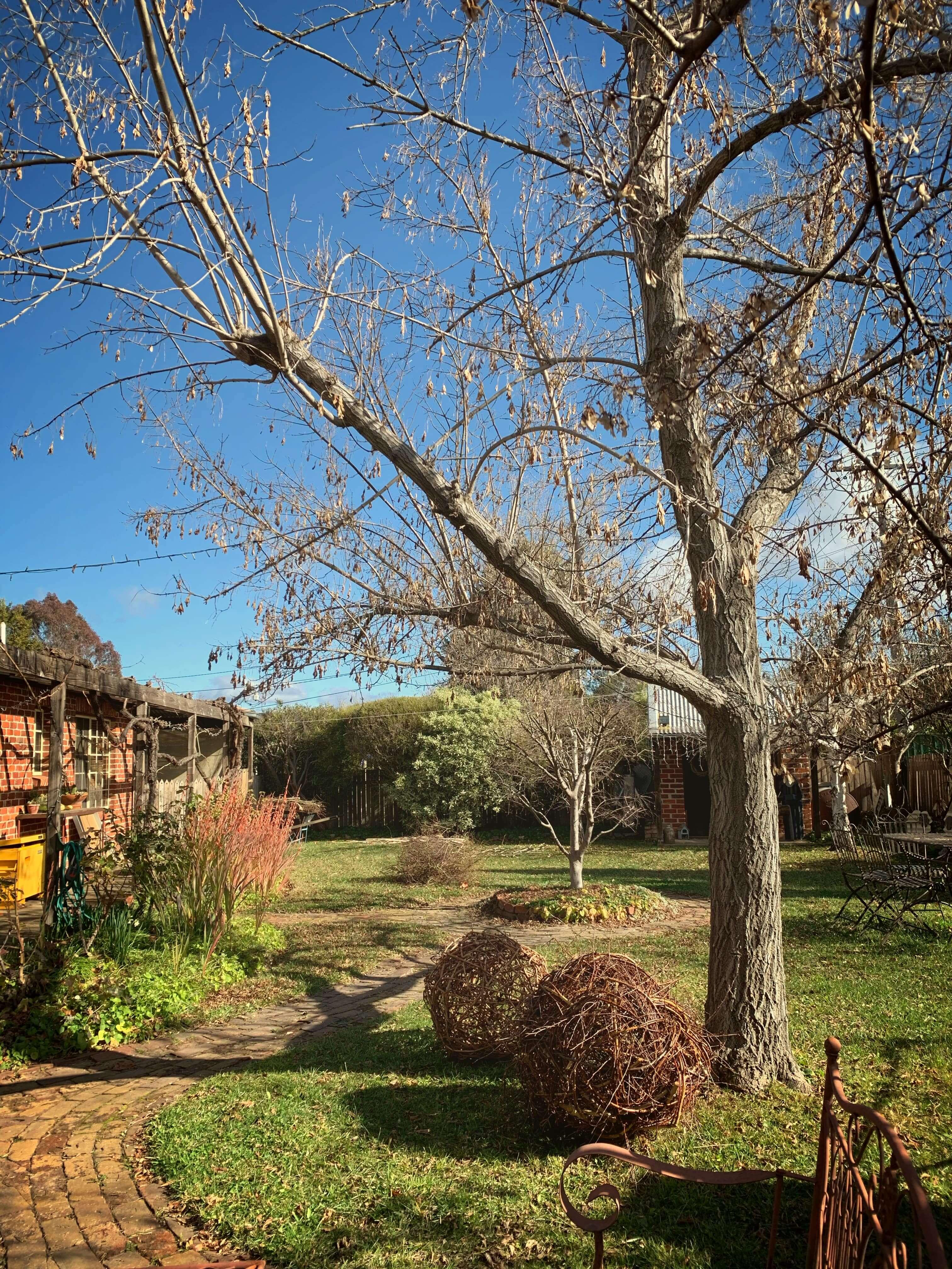 backyard garden in winter, Canberra