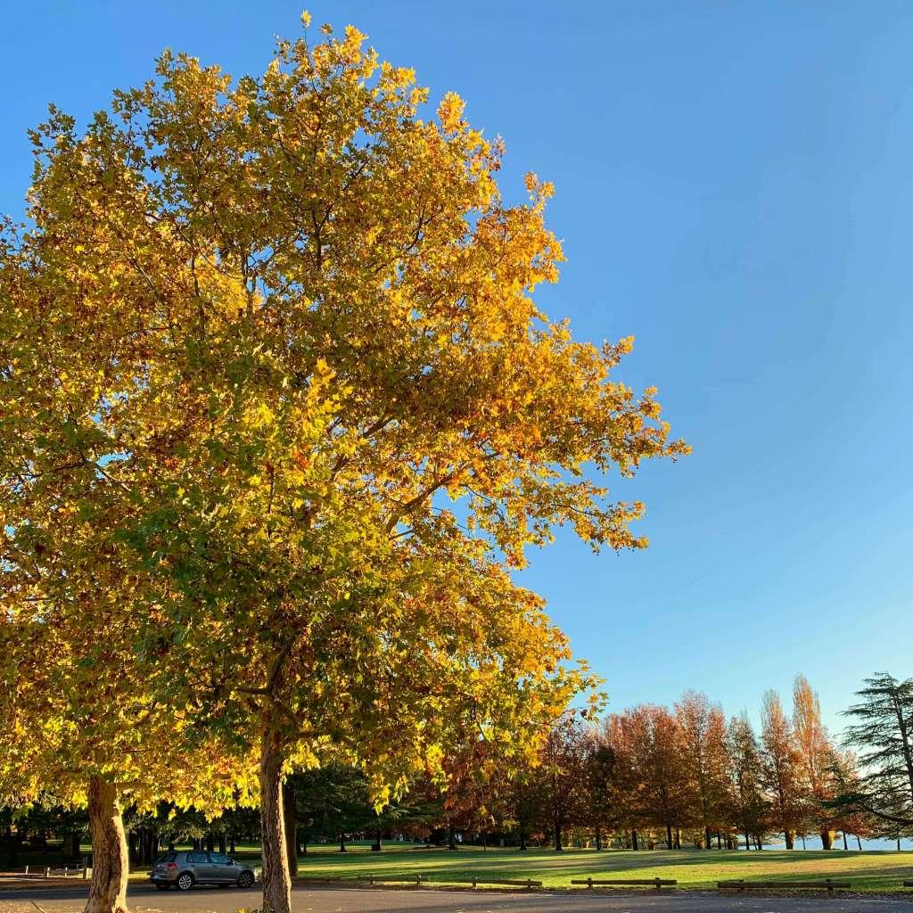 Autumn 2019, Canberra